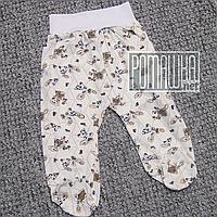 Тонкие ползунки штанишки р74 5 6 7 месяцев детские с широкой резинкой для малышей ткань КУЛИР 3420 Бежевый