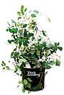 Grow Bag 5 л - Агротекстильный горшок 20х20 см + крышка, фото 5