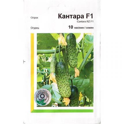 Семена огурца раннего, самоопыляемого «Кантара» F1 (10 семян) от Rijk Zwaan, Голландия, фото 2