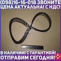 ⭐⭐⭐⭐⭐ Ремень 11х10х1100 МАЗ 6422, ИКАРУС (производство  ЯРТ)  11х10х1100
