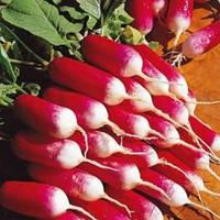 18 дней редис 3 гр. Семена Украины