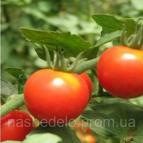 Атлантида томат 0,1 гр. Насіння України
