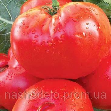 Потрібний розмір томат 0,2 гр.Насіння України