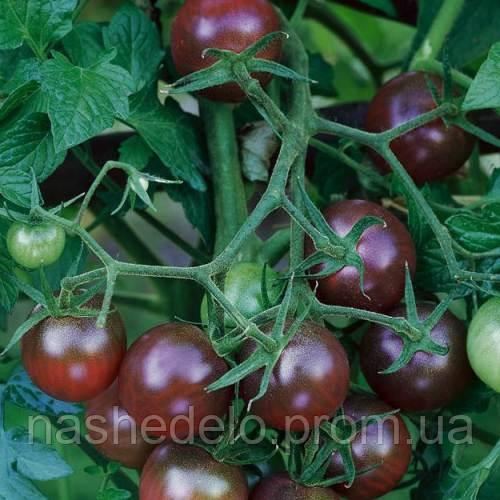 Черри черный 0,1 гр. томат Семена Украины