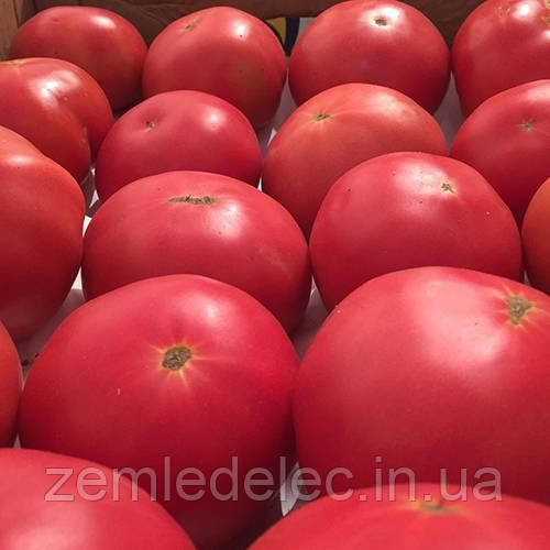Пинк Роуз томат 10 шт. Леда Агро