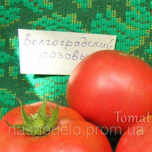 Волгоградский 323 томат 3 г. Vinel