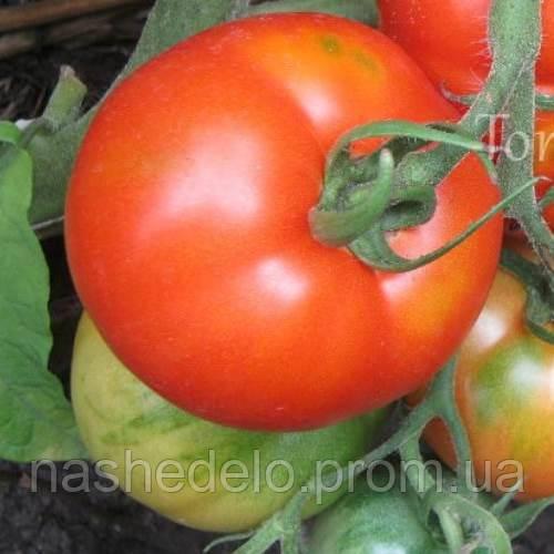 Джина томат 3 г. Vinel