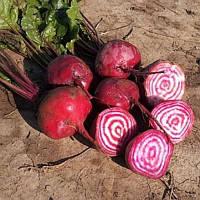 Борщевая свекла 20 гр. Семена Украины