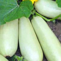 Белоплодный кабачок 3 гр Семена Украины