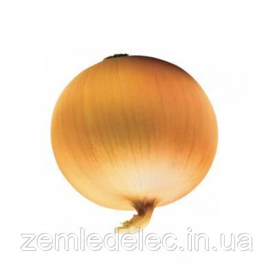 Любчик лук репчатый 1 гр. Семена Укрианы