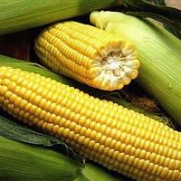 Ароматна кукурудза 20гр Насіння України