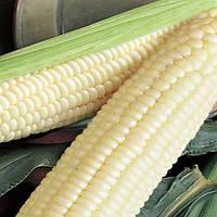 Білосніжка кукурудза 20гр Насіння України