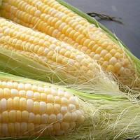 Делікатесна кукурудза 20гр. Насіння України