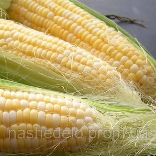 Деликатесная кукуруза 500гр. Семена Украины