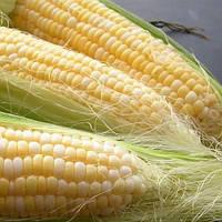 Делікатесна кукурудза 500гр. Насіння України