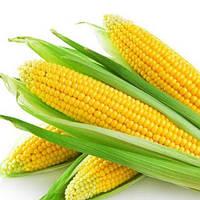 Кадр 267 МВ кукурудза корм. 1 кг. Насіння України