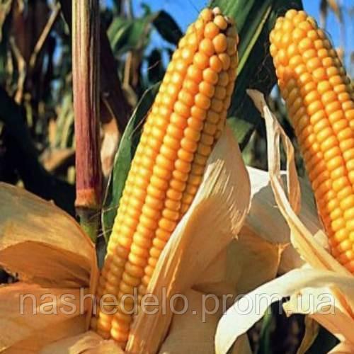 Любава 279 МВ кукуруза корм. 1 кг. Семена Украины