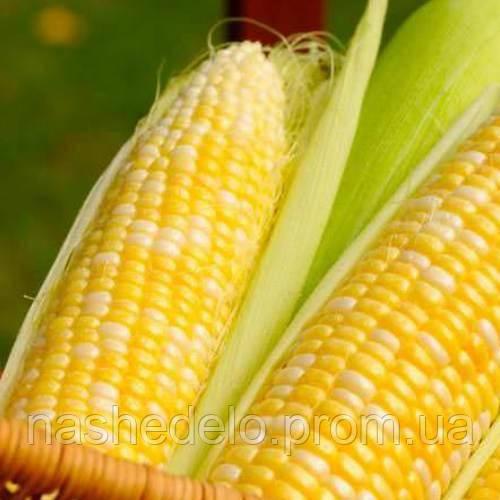 Суперсладкая кукуруза 20гр Семена Украины