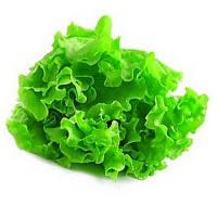 Балконный зеленый салат 0,5 гр. Семена Украины
