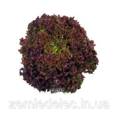 Малиновый шар салат 1 гр. Семена Украины