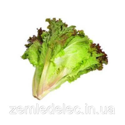 Снежинка салат 1 гр. Семена Украины
