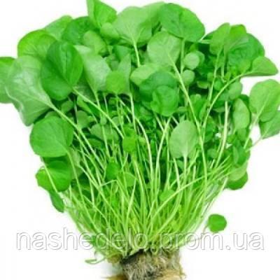 Широколистный кресс-салат 1 гр. Семена Украины