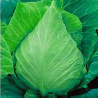 Сердце быка капуста белокачанная 1 гр.Семена Украины