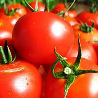 Волгоградский 323 томат 0,2 гр. Семена Украины