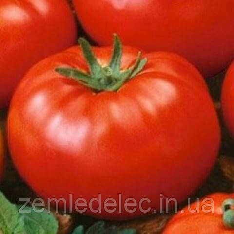 Исполин томат 0,2 гр.Семена Украины