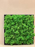 Картина из мха стабилизированного, фото 1