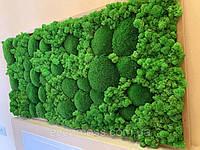Фитокартина из стабилизированных растений