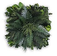 Картина из растений стабилизированных