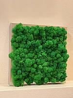 Картина из мха, фото 1