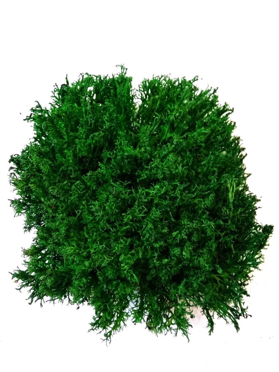 Стабілізований ягель темно-зелений укрїнський