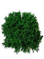 Стабілізований ягель темно-зелений укрїнський, фото 1