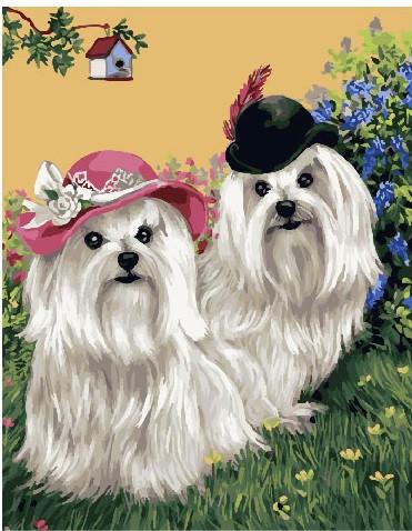 Картина по номерам Лохматые белые болонки, 40x50 см., Brushme
