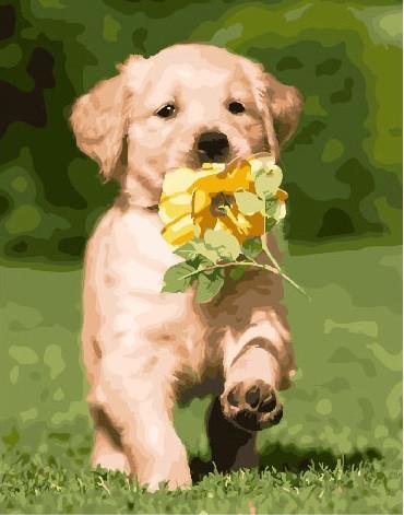 Картина по номерам Щенок лабрадора, 40x50 см., Brushme
