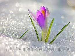 Весна и Сток Маркет!