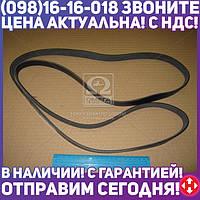⭐⭐⭐⭐⭐ Ремень поликлиновый 6PK1995 (производство  DONGIL)  6PK1995