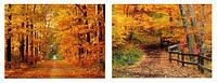 Картина принт 90см Осенний лес, 2 вида BonaDi 806-21