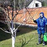 Чем обрабатывать деревья от болезней и вредителей по фазам