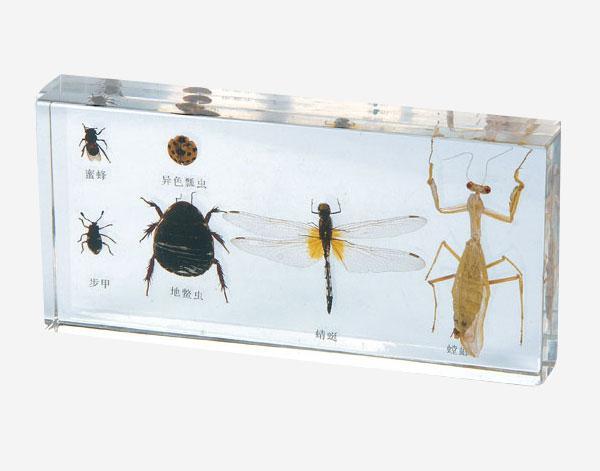 Корисні комахи в прозорому пластику