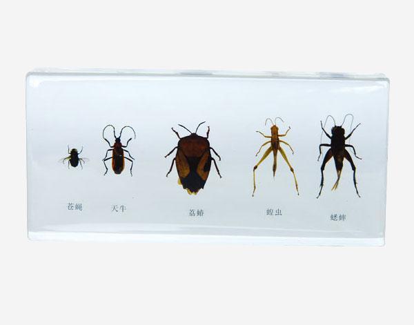 Шкідливі жуки в прозорому пластику