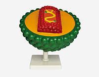 Модель Вірус AIDS (СНІД)