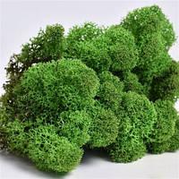 Мох стабилизированный 60 грамм зеленый