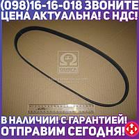 ⭐⭐⭐⭐⭐ Поликлиновой ремень (Пр-во Contitech) 6PK1010