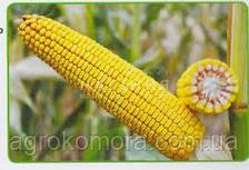 ДН Зоряна кукурудза зернова 80 тис.нас (Рост Агро)