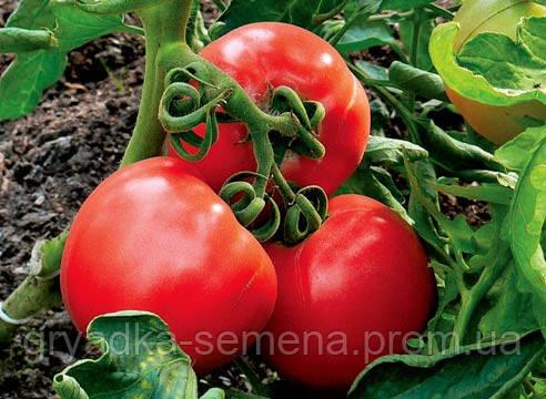 Томат Шаста F1 Lark Seeds 10000 семян