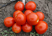 Томат 1855 F1 Lark Seeds 5000 семян