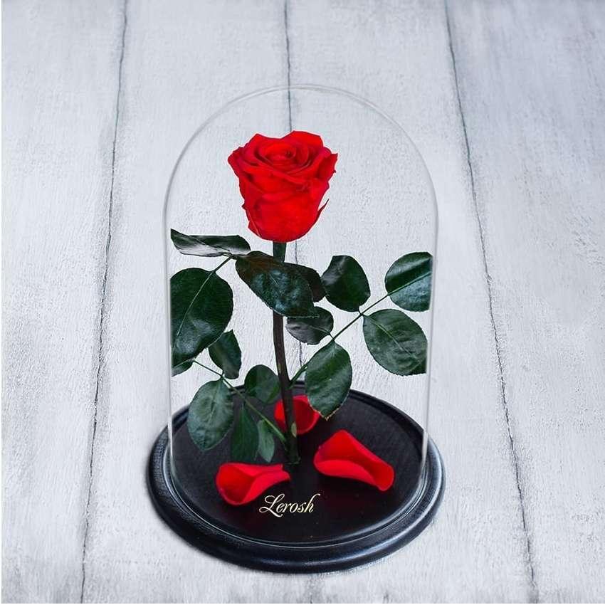 Стабилизированная роза в колбе Lerosh - Standart 33 см, Красная - 138918